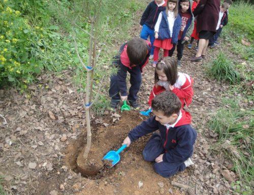 """Οι """"μικροί κηπουροί"""" φυτεύουν στο δασάκι του νηπιαγωγείου"""