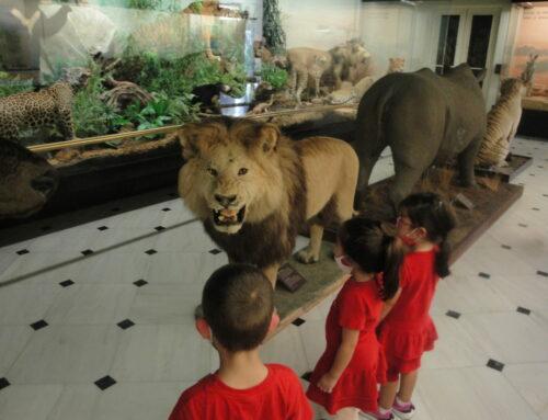 Επίσκεψη στο Μουσείο Φυσικής Ιστορίας Γουλανδρή