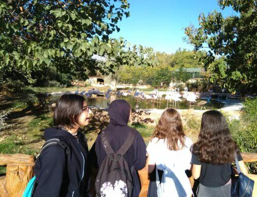 Εκπαιδευτική επίσκεψη στο Αττικό Ζωολογικό Πάρκο – Α' Τάξη του Γυμνασίου Ηρακλείου