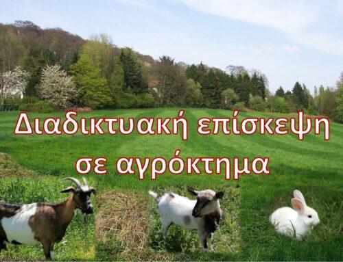 Διαδικτυακή επίσκεψη σε αγρόκτημα   Γ' Δημοτικού Ηρακλείου