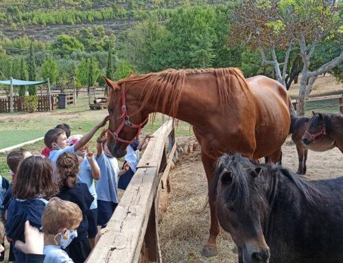 «Ανακαλύπτοντας τα ζώα της φάρμας σε μια εκπαιδευτική επίσκεψη στο Farmamoo!» –  Α΄ Δημοτικού Ηρακλείου